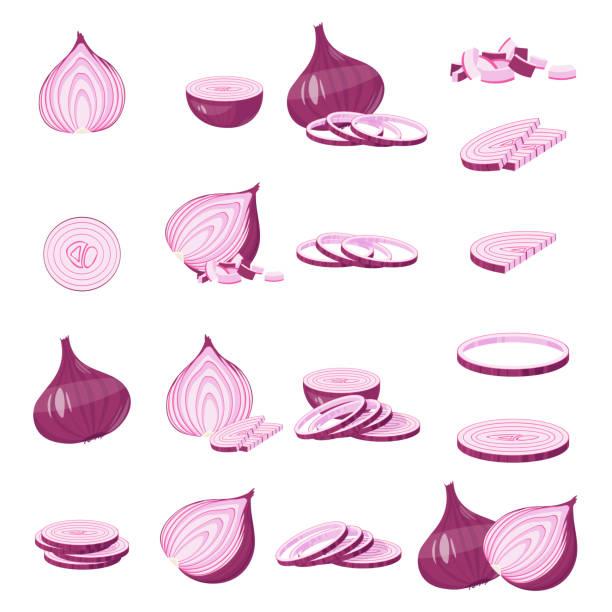 red onion cartoon illustration isolated on white vector - onion stock illustrations