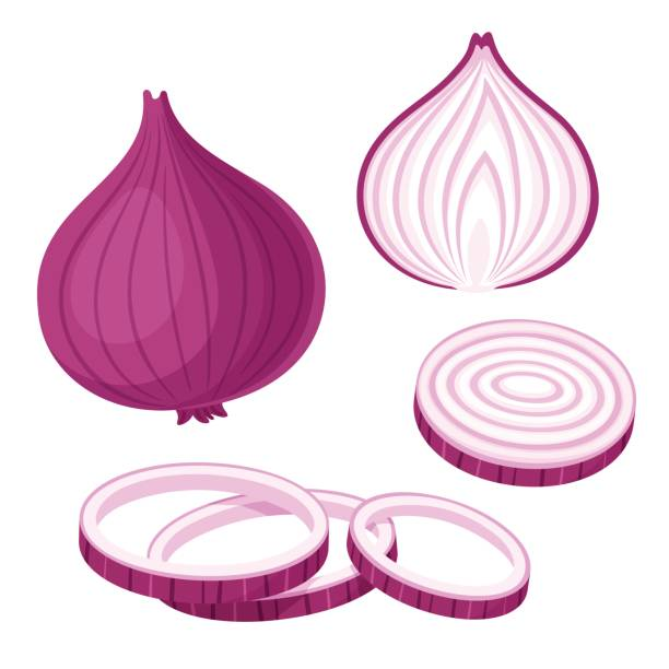 Red onion illustration set Red onion set. Cut in half, slice and onion rings. Isolated vector illustration. onion stock illustrations