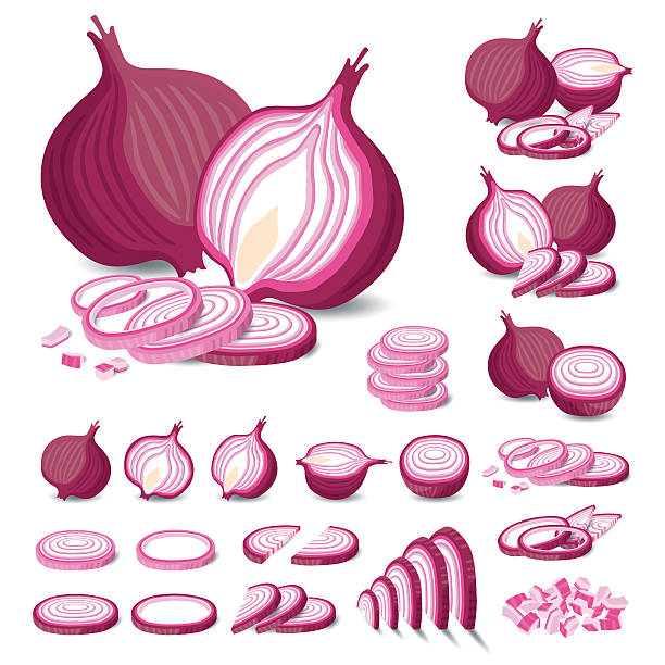 red onion isolated vector - onion stock illustrations