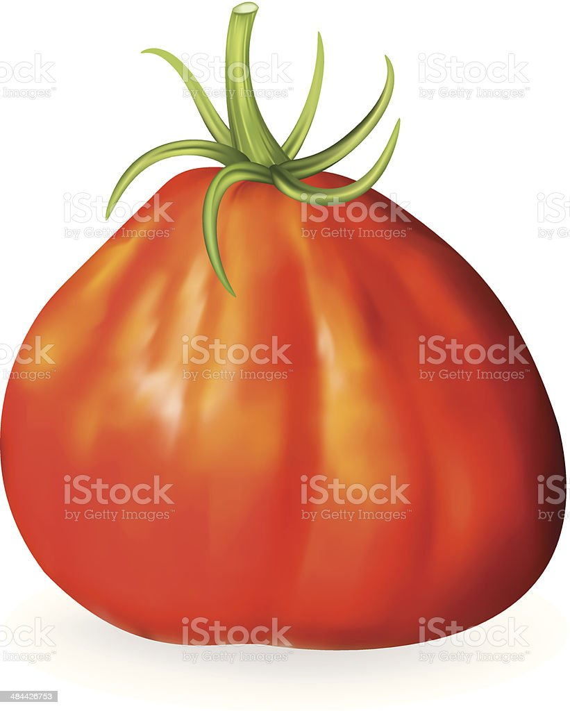 Red Oxheart Heirloom Tomato royalty-free stock vector art