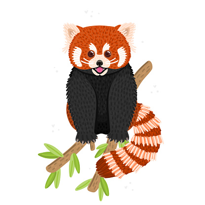 Red panda. Cute fluffy animal sits on branch. Endangered species. Character design