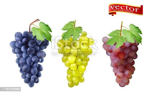 Red, Pink Muscatel and white table grapes, wine grapes. Fresh fruit, 3d vector icon set. Cluster of grapes red and white 3d vector set for design. Bunch of grapes ripe, juicy, high detail vector