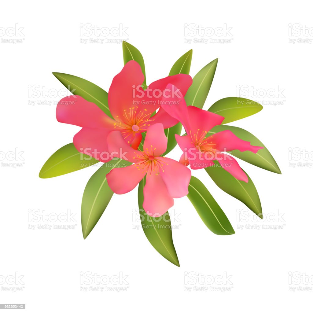 Red pink tropical flowers and leaves oleandr bouquet vector illu red pink tropical flowers and leaves oleandr bouquet vector illu royalty free red pink tropical mightylinksfo