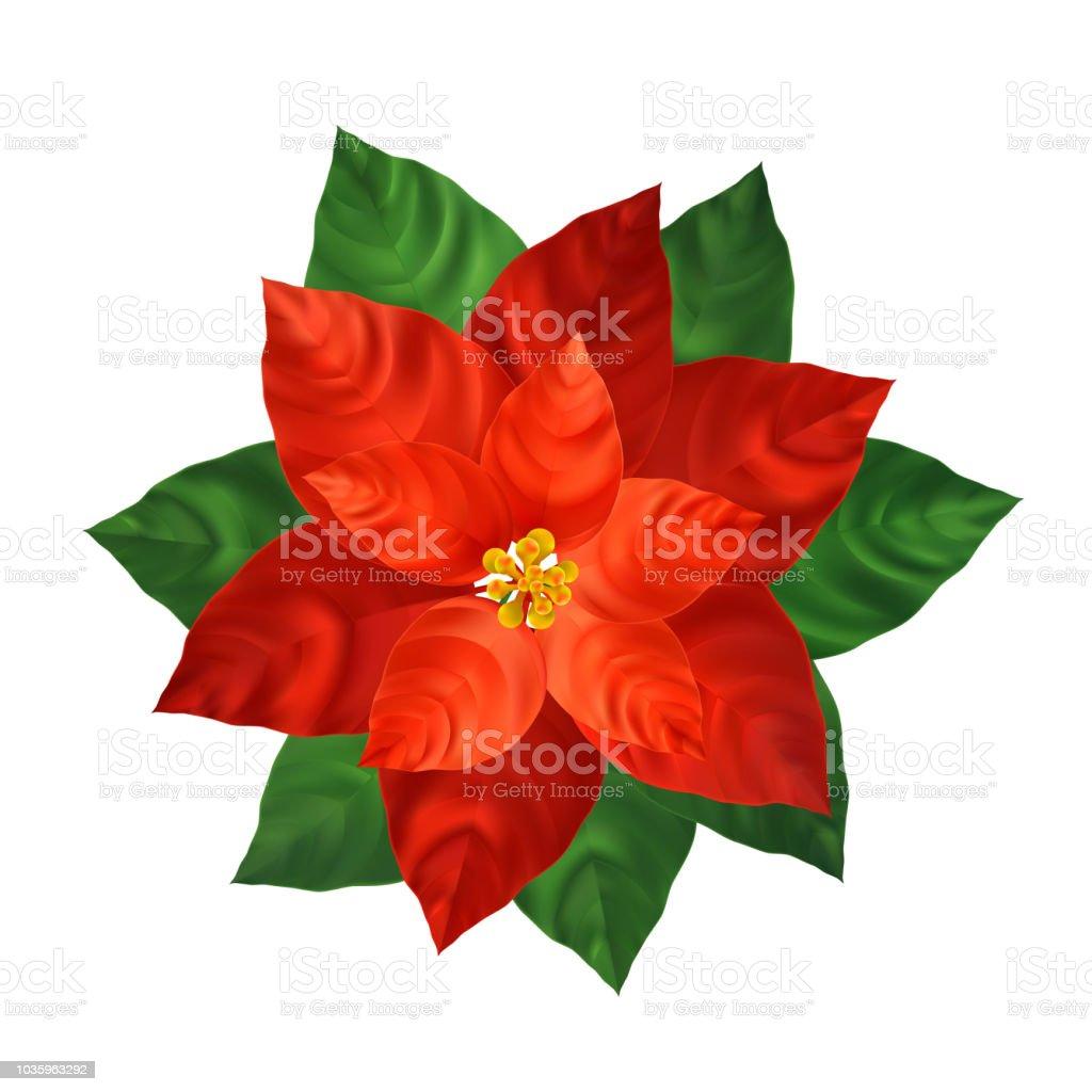 Realistische Darstellung Der Roten Weihnachtsstern Blume Stock ...