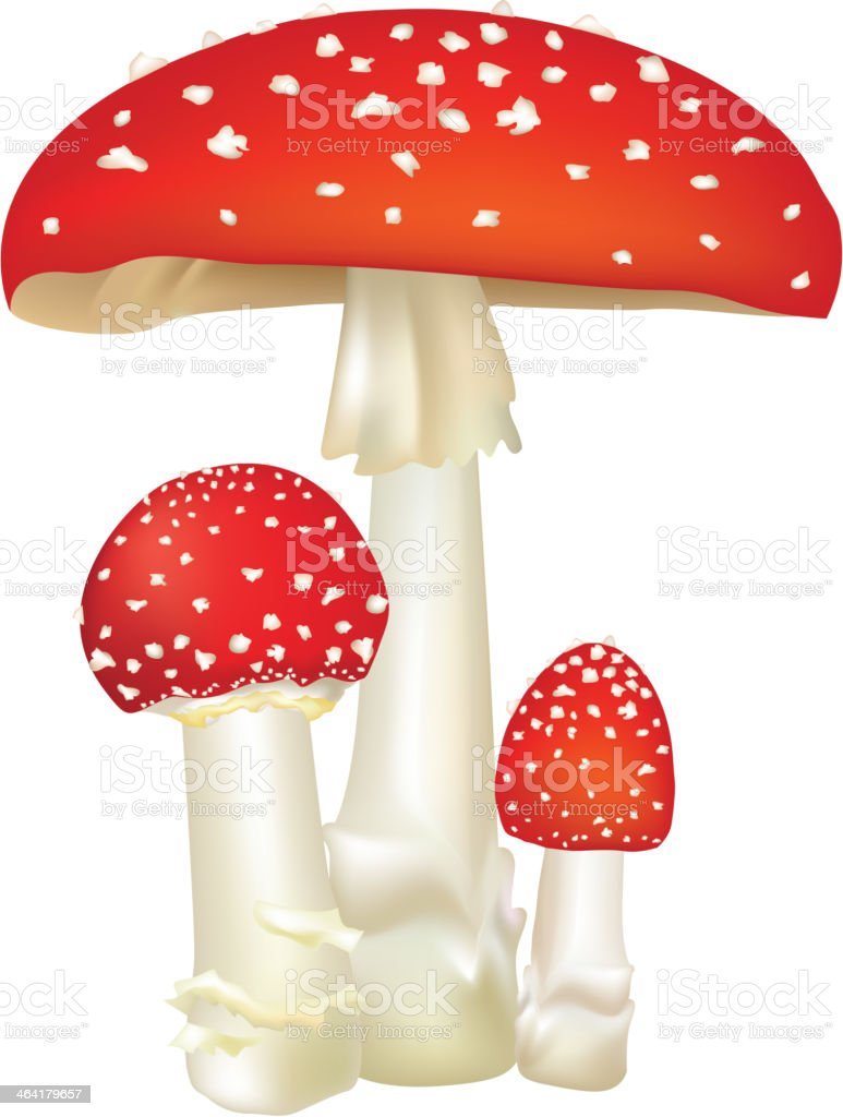 Red poison mushroom.  Death-cup mushrooms label. vector art illustration