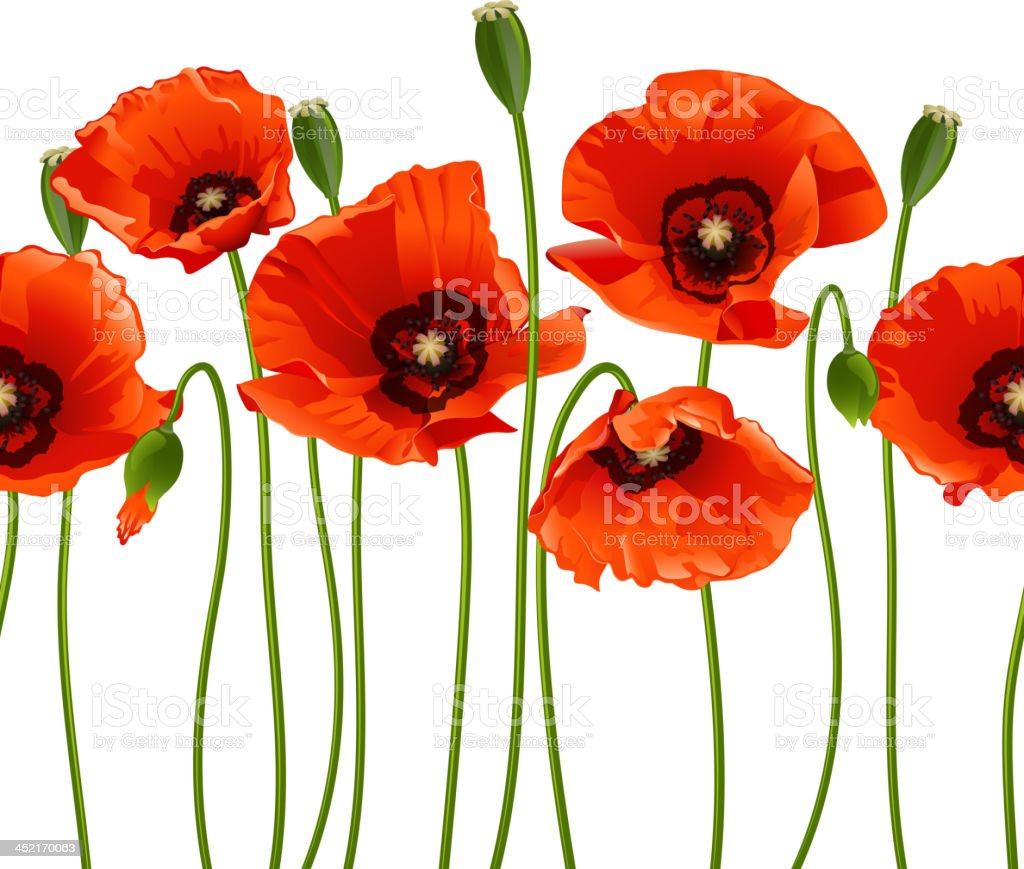 Red poppies in a row. vector art illustration