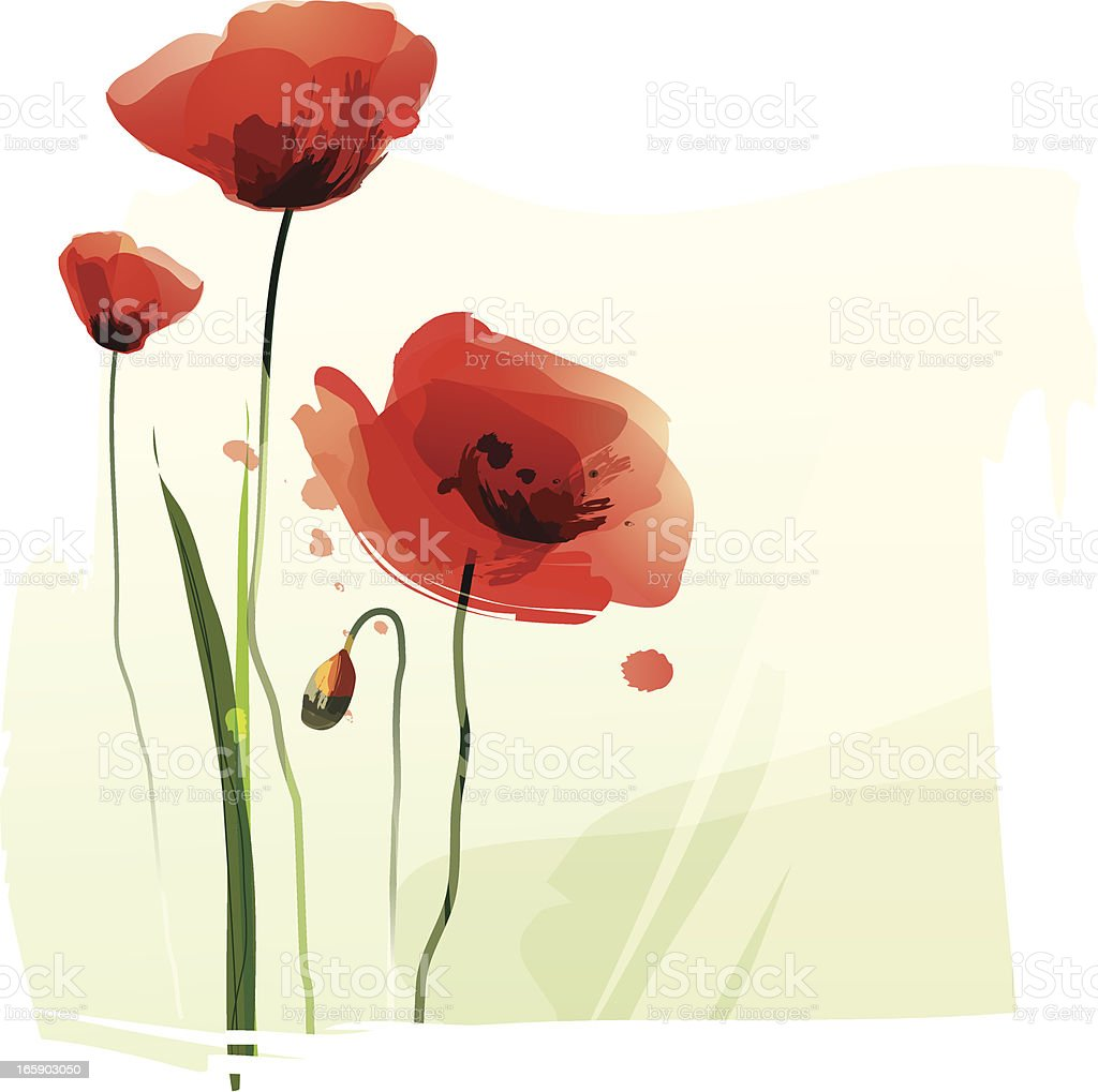 Red Poppies vector art illustration