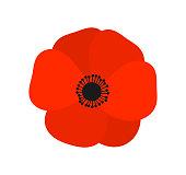Red poppy  flower. Vector illustration
