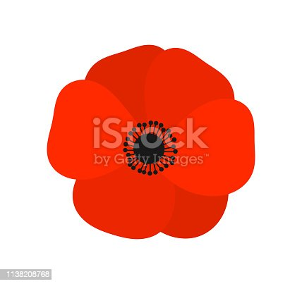 Red poppy  flower. Vector illustration