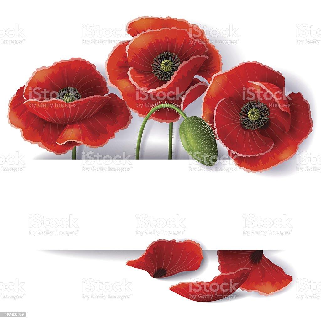 Red poppy flowers vector art illustration
