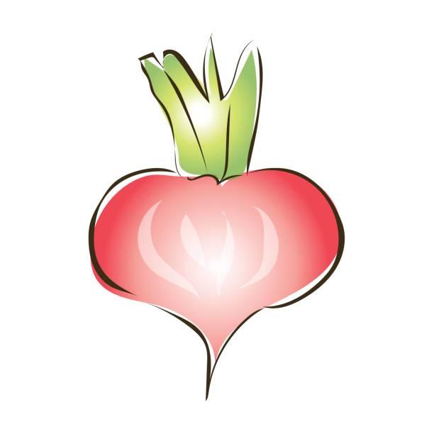 紅芯大根、カブや他の根野菜。ベクトル図では、白い背景で隔離。 ベクターアートイラスト