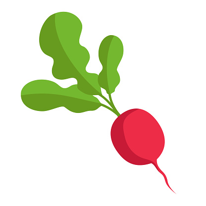 Red radish with green tops. Illustration of a vegetable on a white background in the flat style.