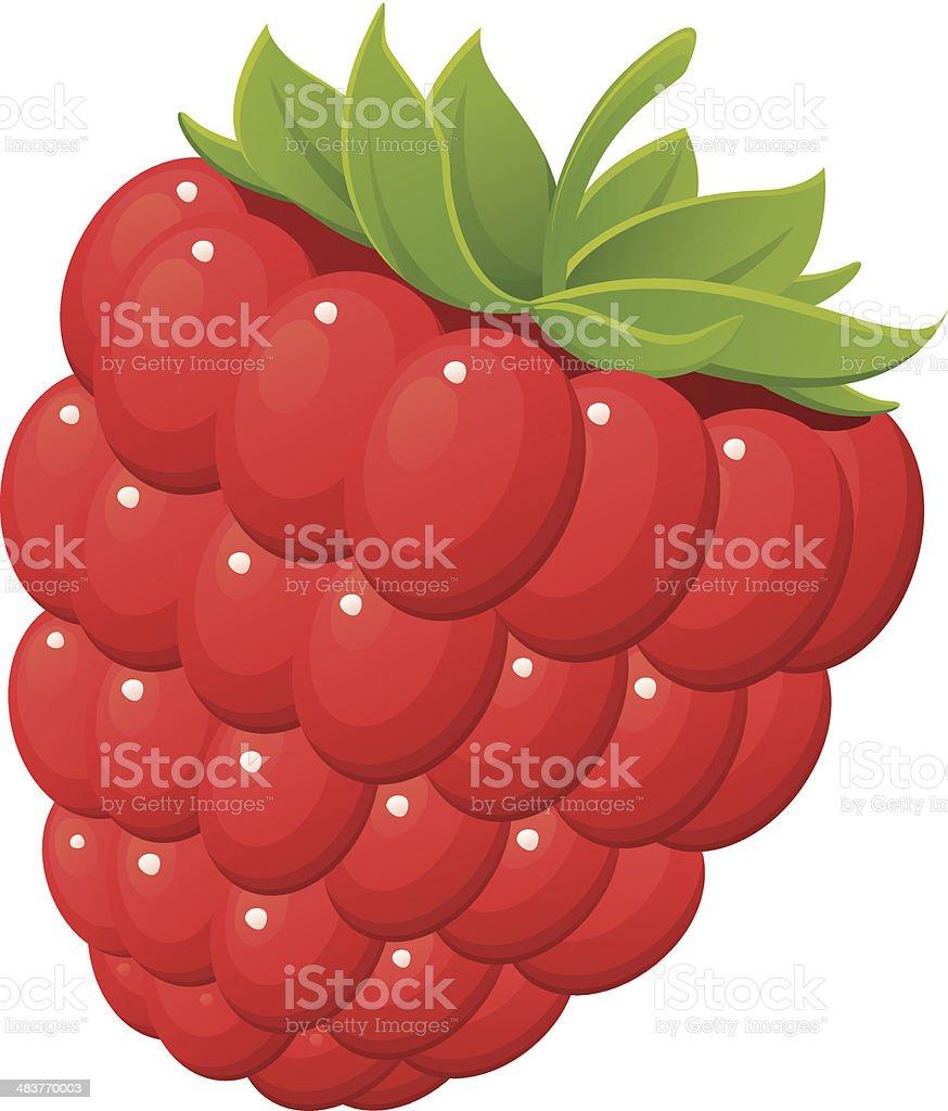 Red Raspberry vector art illustration
