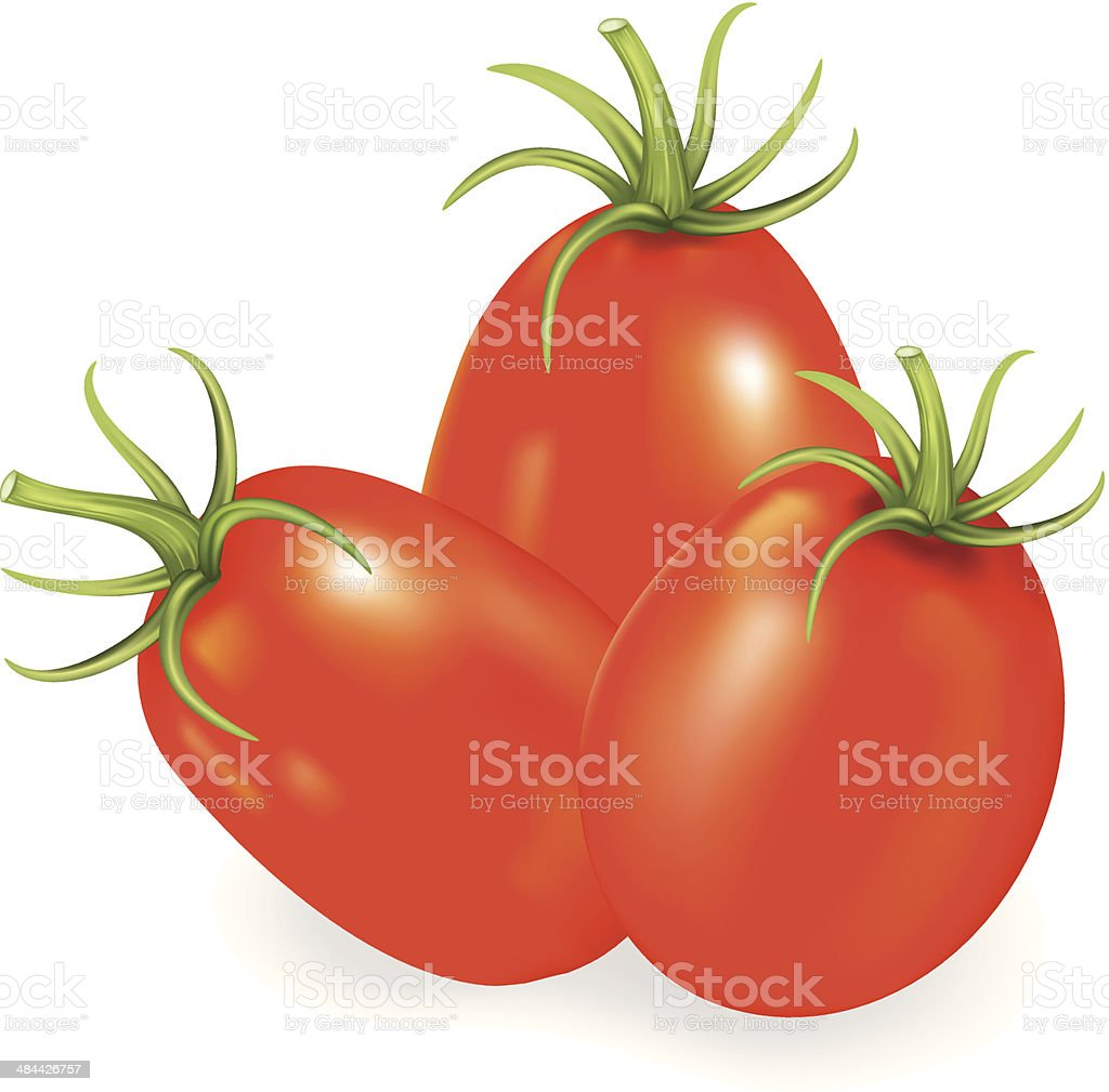Red Roma Tomatoes vector art illustration