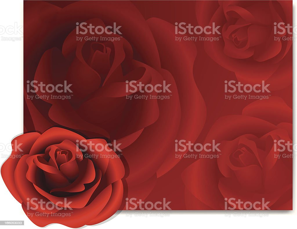 Red Rose Background royalty-free stock vector art
