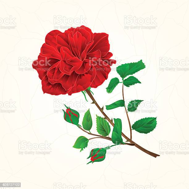 Red rose cracks in the porcelain vintage vector vector id625727122?b=1&k=6&m=625727122&s=612x612&h=kzeqv95tgzehxjkjucdcv4ked53uwnpstiua5hpwmyk=