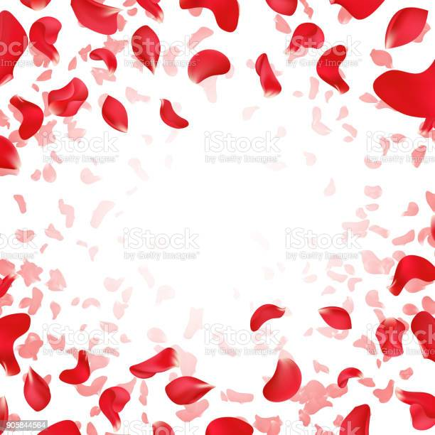 Red rose falling scattered petals wedding vector background vector id905844564?b=1&k=6&m=905844564&s=612x612&h=h4yl9uqpceyprb6mgq9pqa0vwgwz2it23eeydrf0jco=