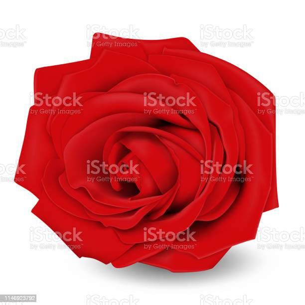 Red rose flower realistic 3d vector illustration isolated on white vector id1146923792?b=1&k=6&m=1146923792&s=612x612&h=98wbugasde 062nrjpxqsziejh8xfcgpcjqykuebqxm=