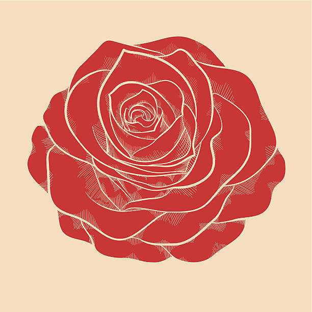 red rose in a hand-drawn graphic style in vintage colors beautiful red rose in a hand-drawn graphic style in vintage colors flowers tattoos stock illustrations