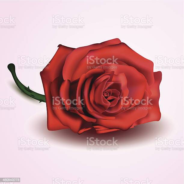 Red rose isolated on white and pink background vector id450543273?b=1&k=6&m=450543273&s=612x612&h=9k9biqbr2upghaioudvvtr5fepayjq8 bewgsbmzayi=
