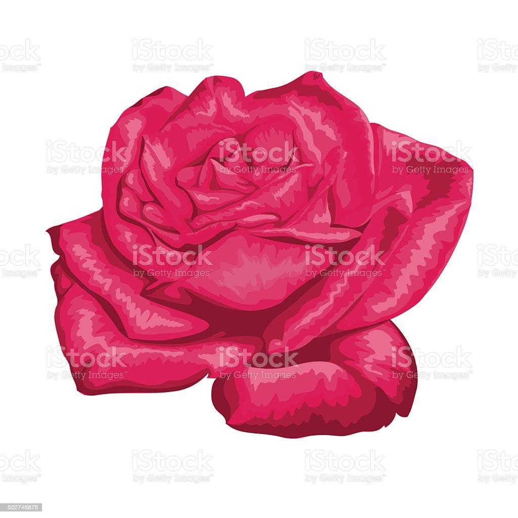 Rose Rouge Isole Sur Blanc Cliparts Vectoriels Et Plus D Images De