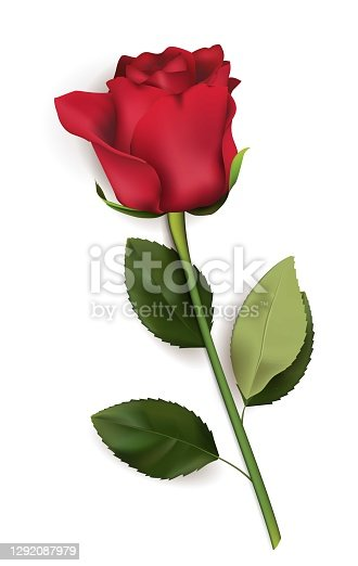 istock Red rose lies on a white background. Use as clipart, element for greeting card. Vector stock isolated illustration in realistic style. Top view 1292087979