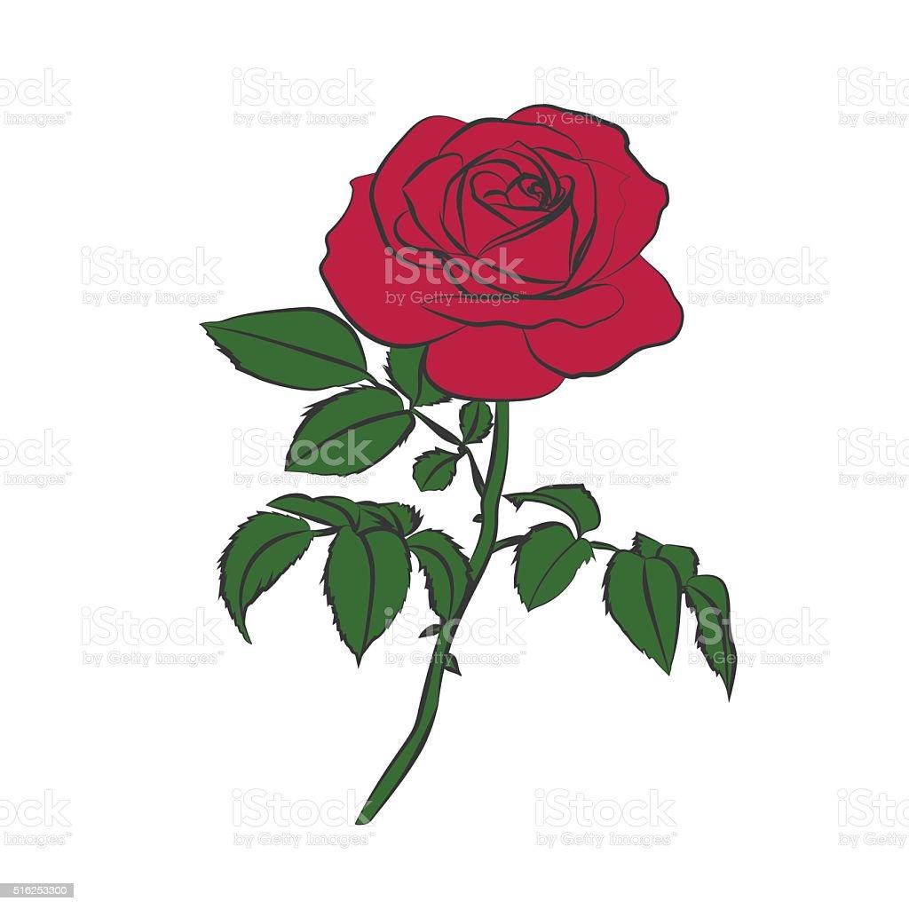 Rosa Rossa Su Sfondo Bianco Immagini Vettoriali Stock E Altre