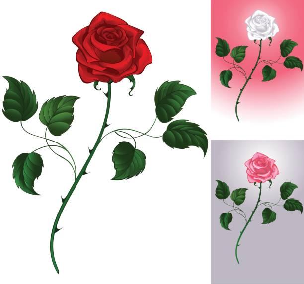 red rose on white - plant stem stock illustrations