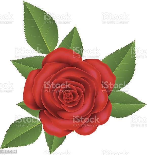 Red rose vector id463373299?b=1&k=6&m=463373299&s=612x612&h=9tdzat4tnsyef8wyjinjjqcfavvkbhrm3eletqcihus=