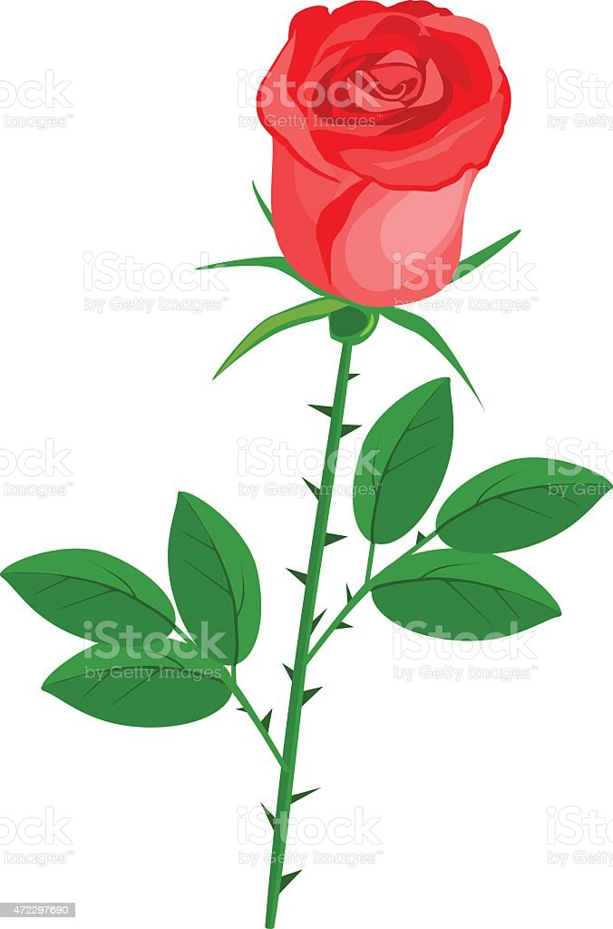 Red rose vector art illustration