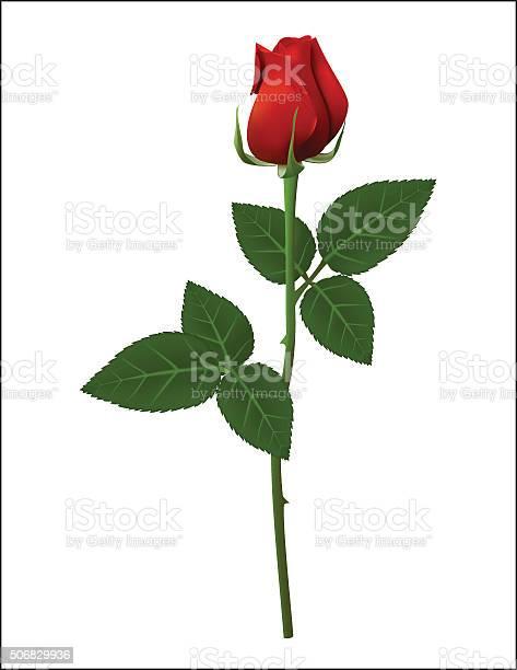 Red rose vector id506829936?b=1&k=6&m=506829936&s=612x612&h=az8rxat6q9dzifxzvkjzdnxjo7zyojhx rj7wldprhu=