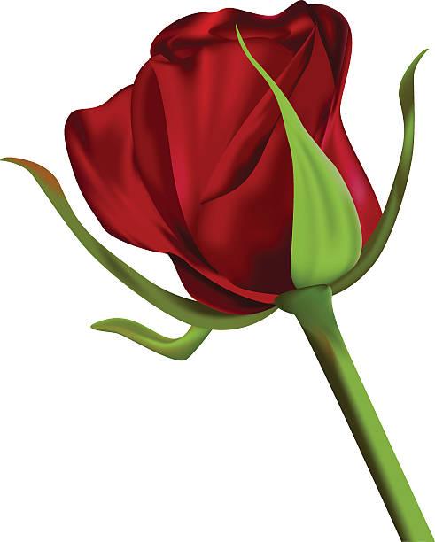 Long Stem Rose Illustrations, Royalty-Free Vector Graphics & Clip Art - iStock