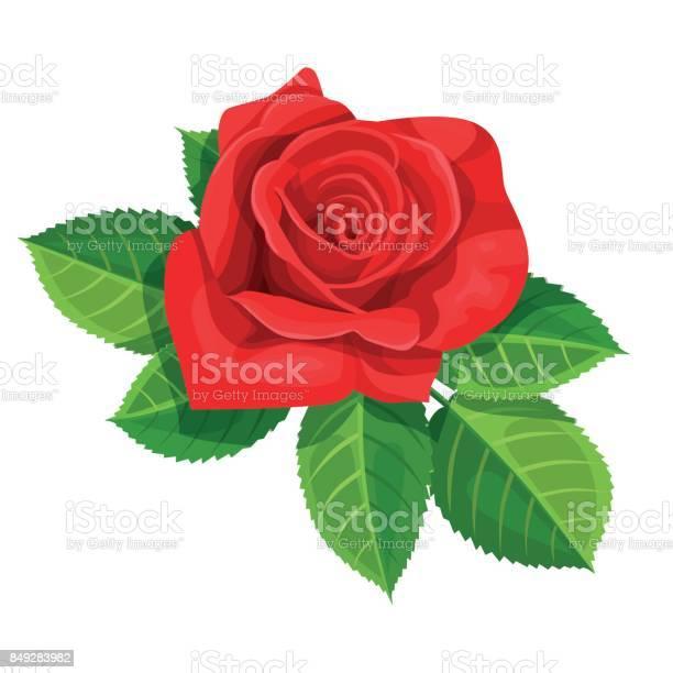 Red rose vector illustration isolated on white background vector id849283982?b=1&k=6&m=849283982&s=612x612&h=gcpni5fexzomeyqrfuk3bl7gouuj16baarksujpvfqk=