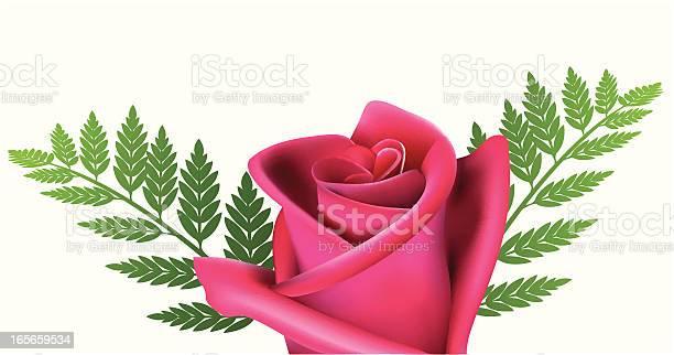 Red rose vector vector id165659534?b=1&k=6&m=165659534&s=612x612&h=s2unzxdtxrcc2zgzeutxk5li6pvteaqfu7jkcraztxy=