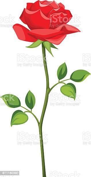 Red rose with stem isolated on white vector illustration vector id611180392?b=1&k=6&m=611180392&s=612x612&h=dndkktkgspgre5e52euntnd0tl ro9dqjnbh31v3xe0=
