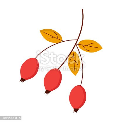 istock Red rosehip with leaves on a white background for use in web design or as a print 1322902315