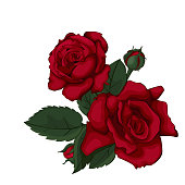 Red roses for the wedding, birthday, Valentine's Day, Mother's Day.