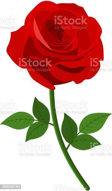 Red roses icon vector id643255764?b=1&k=6&m=643255764&s=612x612&h=2qjkaqasnkdkaboxlg14lc85huv1xwcycty50li4jh0=