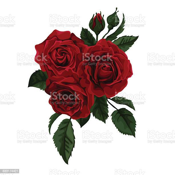 Red roses rosebuds and leaves vector illustration vector id533174421?b=1&k=6&m=533174421&s=612x612&h=5s7gswzulpho0tc71ggtlzyrzdmp5oh9blwz9hbvqqa=