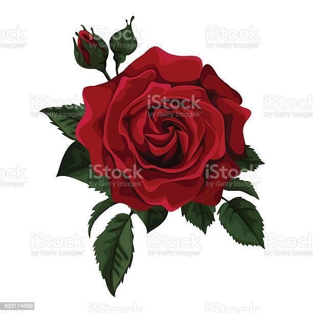 Red roses vector id533174559?b=1&k=6&m=533174559&s=612x612&h=x2vxjv14oqt2khozcd2xv9srn x3otgvye1pgy6 434=