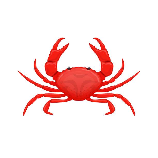 stockillustraties, clipart, cartoons en iconen met rode zee krab. soorten schaaldieren kreeften van zeeën en oceanen - krab gerecht