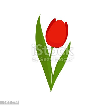 istock Red tulip on a green stem with leaves isolated on a white background 1297215775