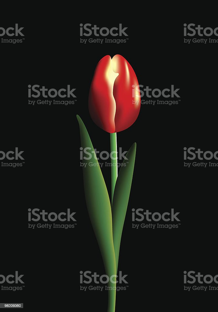 Red tulip royalty-free red tulip stock vector art & more images of anniversary