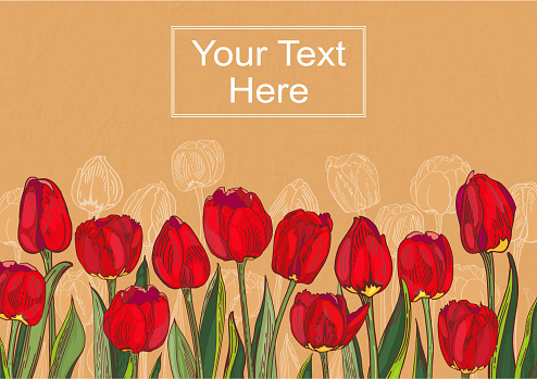 red tulips background postcard hand drawing