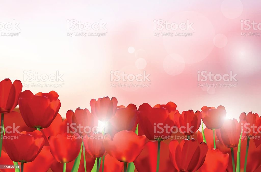Red tulips on shiny background vector art illustration