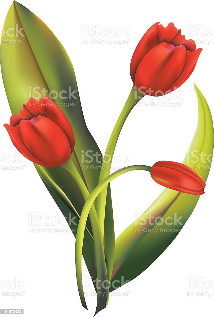 Red Tulips royalty-free stock vector art