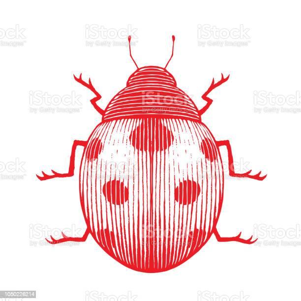 Red vectorized ink sketch of ladybug illustration vector id1050226214?b=1&k=6&m=1050226214&s=612x612&h=jioazzwyiy8qrhse34anu3msz5ax0pfw5tlxxufh2oy=
