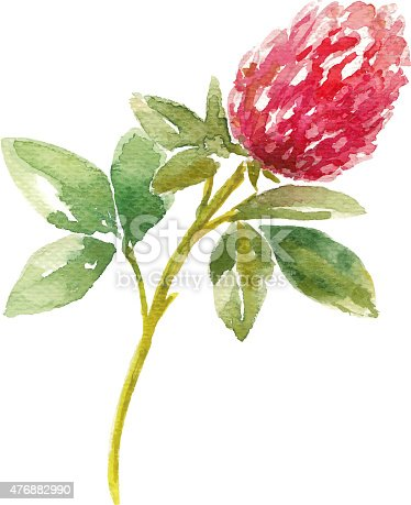 Red watercolor clover field. Watercolor floral illustration.
