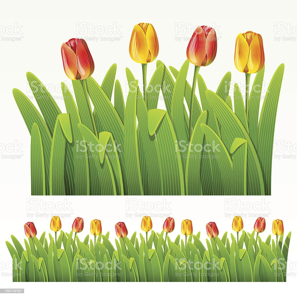 Red yellow flower on herbaceous border vector art illustration