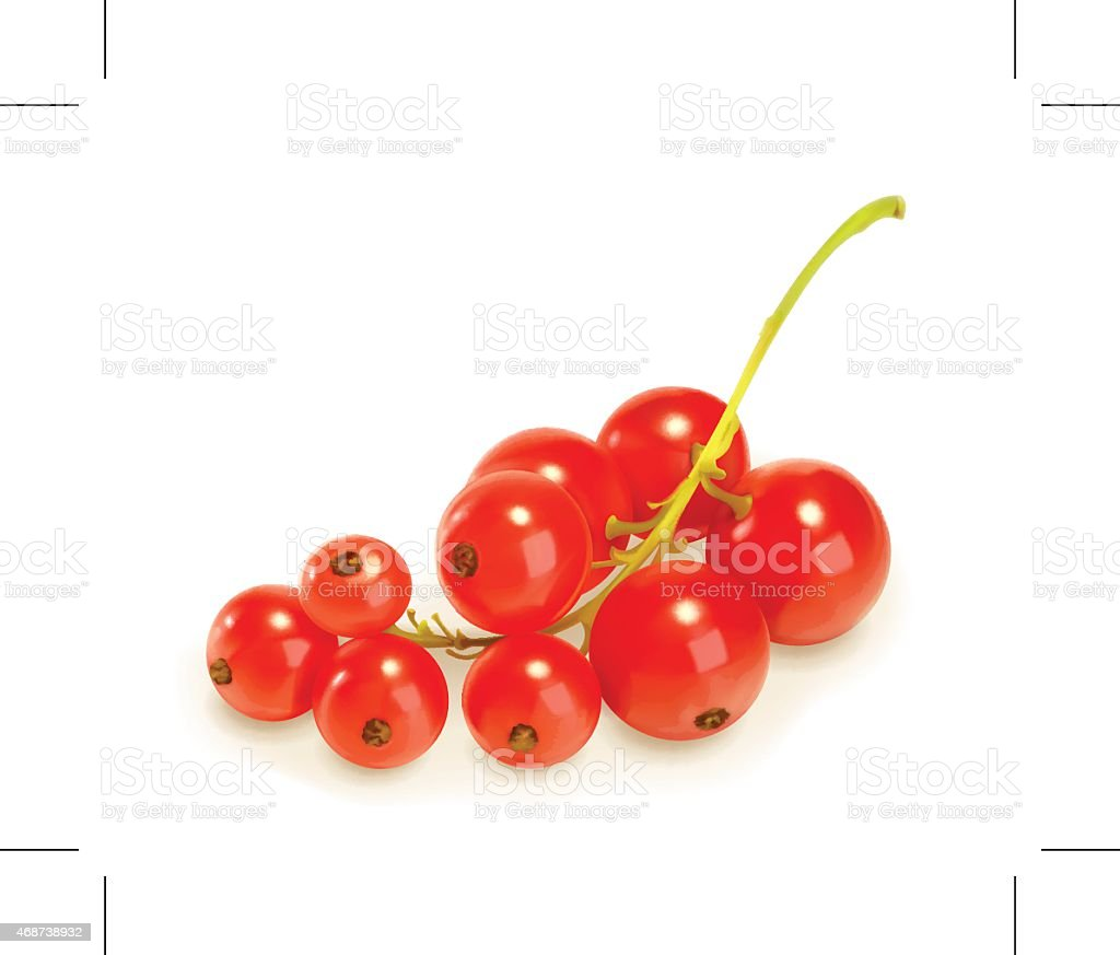 Redcurrant berries, vector illustration vector art illustration